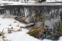 Красные стоки «Овощей Черноземья» привели к загрязнению реки Усмань