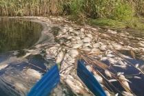 Росприроднадзор исследовал место гибели рыбы на реке Токай в Воронежской области