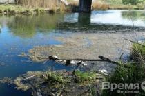 Масловский затон Воронежского водохранилища реабилитируют за 26,7 млн рублей