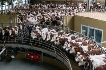 Депутаты Госдумы изучили воронежский опыт развития животноводства