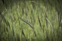 Воронежские власти анонсировали сертификацию земель для органического земледелия