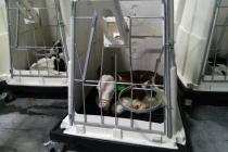 В Воронеже Алексею Гордееву показали первый в России комплекс по превращению молочных телят в «мраморные»