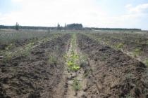 Федбюджет добавит Воронежской области полмиллиарда на спасение леса