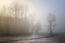 В Воронеже к созданию Большой экотропы приступят в 2019 году