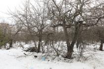 Яблоневые сады под школу: воронежцы определили судьбу земельного участка на Московском проспекте