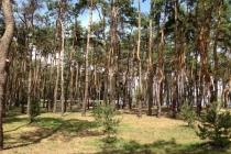Установление границ зеленого пояса вокруг Воронежа обойдется бюджету области в 3,7 млн рублей