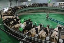 В Воронежской области произвели рекордное количество молока