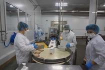 Воронежский «Молвест» запустил новую линию по нарезке сыров ультразвуком