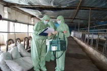 Воронежского фермера подозревают в распространении АЧС под Архангельском