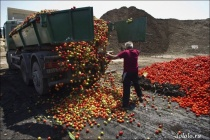 Уничтожайте апельсины бочками
