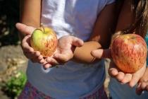 В Воронеже увеличат дотации на питание учащихся вне школ