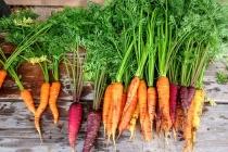 Без пестицидов и ГМО. Когда воронежцам ждать органическую продукцию