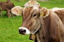 Еще один воронежский фермер попался на махинациях с субсидиями