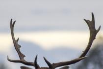 Смерть оленя в Воронеже заставила депутатов Госдумы обратиться в прокуратуру