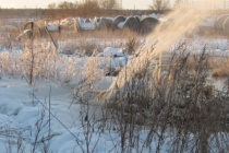 Сточное озеро «ЭкоЛайнера» прославило Воронеж на всю Россию