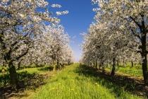 «Спартан» решил потягаться с государством за воронежский яблоневый сад