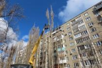 В воронежских дворах управляющие компании опилили 1,5 тыс. старых деревьев