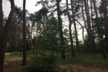 В Воронеже власти разорвали контракт по санитарной вырубке Северного леса