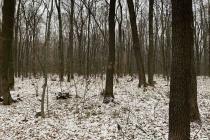 Владелец захотел избавиться от участка в Северном лесу Воронежа за 12 млн