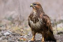Воронежскому зоопарку предписали уничтожить всех птиц