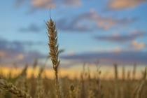 Пустующее с сентября кресло главы воронежского департамента аграрной политики занял Алексей Сапронов