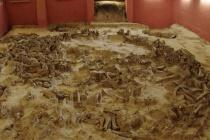 Раскопали растрату: что известно о деле против директора воронежского музея «Костенки»