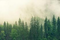 Изменением границ воронежских лесопарковых зон займется чебоксарская фирма