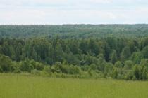 За использование воронежских лесов государство получило 50 млн рублей