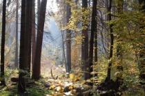 Опрос «Времени Воронежа»: горожане не верят в «зеленый пояс»