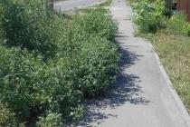 Бурьян заполонил дорогу в райцентре под Воронежем