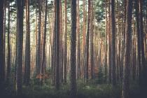Власти Воронежской области вернулись к проекту «зеленого пояса»