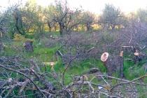 Похищенный земельный участок мэрия Воронежа переводит в зону застройки