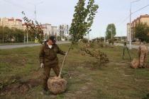 На обновленной улице Острогожской в Воронеже высадят 473 дерева