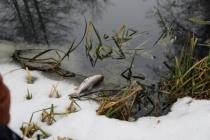 Липецкий арбитраж оставил в силе наказание местному предприятию за загрязнение воронежской реки