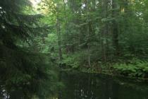 Вокруг Воронежа создадут лесопарковый пояс