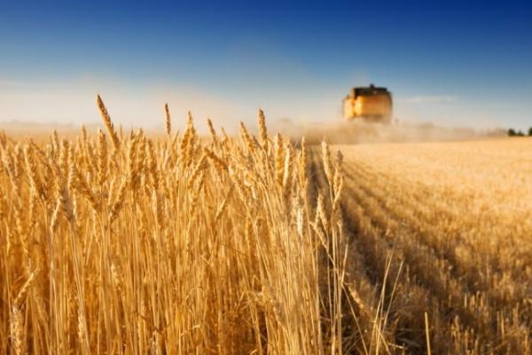 Воронежское зерно останется в области