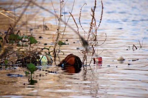 Экологи бьют тревогу – река Воронеж захламлена пустыми бутылками