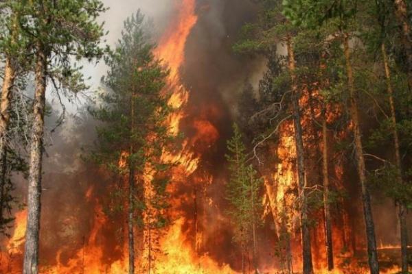 В воронежских лесах не соблюдаются меры пожарной безопасности
