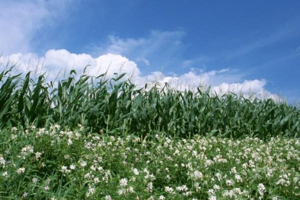Воронежцам обещано теплое лето без аномальной жары