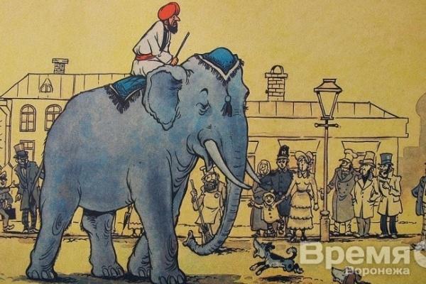 В Семилуках конкурс между «слоном» и «моськами»?