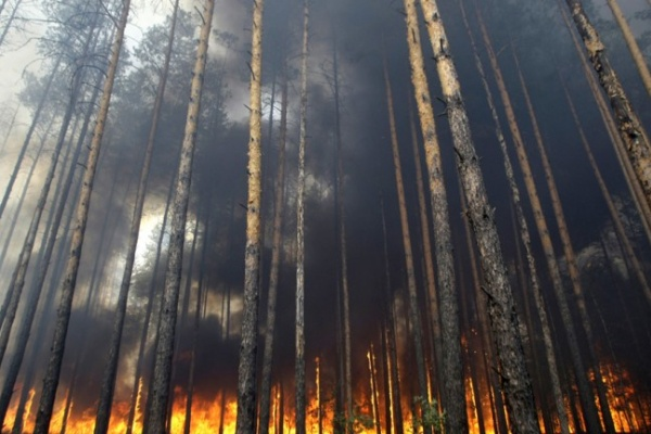 В Воронеже на неделе ждут лесных пожаров