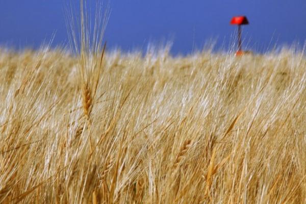 Прокуратура заинтересовалась незаконным использованием земель в Воронежской области