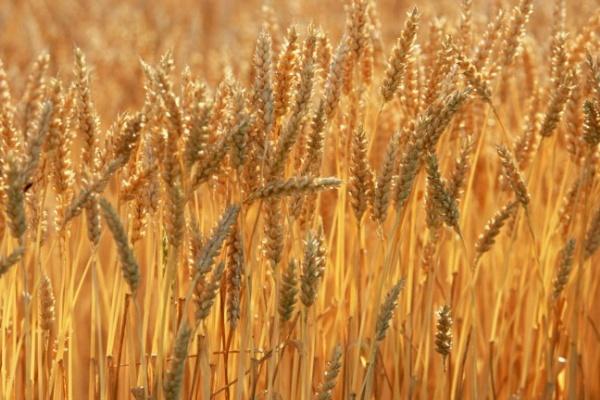 В Воронежской области переоценят сельхозземли