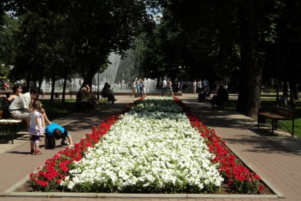 Центру Воронежа власти к юбилею подарили цветов на 8 млн рублей