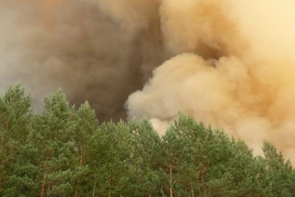 В Воронежской области количество лесных пожаров сократилось на 80%