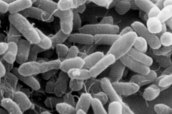 Содержание кишечной палочки в водоемах Воронежской области превышено в 240 раз