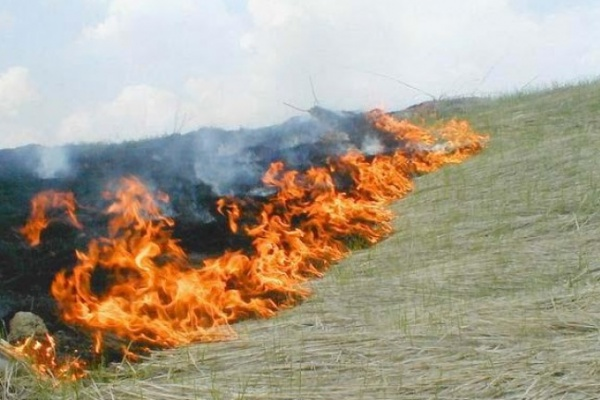 Из-за аномальной жары по Воронежской области вспыхивают природные пожары