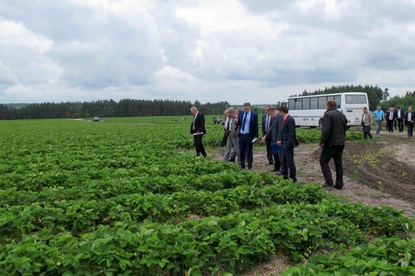 Федеральный бюджет выделил воронежским аграриям более 5 млрд рублей