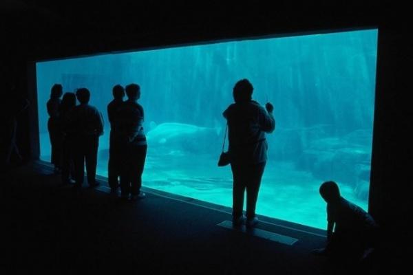 «Град» обманул ожидания воронежцев, отложив открытие океанариума