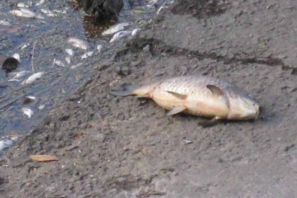 В Воронежской области мясокомбинат заплатит за загрязнение реки